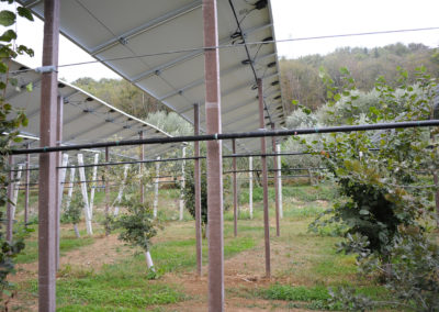 Impianto fotovoltaico in una giovane tartufaia coltivata di Tuber aestivum Vittad